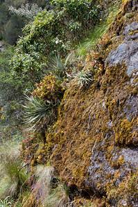Inca Trail Day 3-81