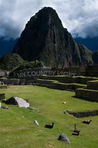 Machu Picchu-142