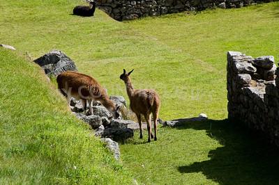 Machu Picchu-122