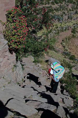 Titicaca 5495<br /> Portor bringing up supplies for the village on Taquile Islnd. They have 787 feet to climb at 13287 elevation. All the supplies for the village is carried up. The men will carry a 100 plus pounds and the Woman will carry 50 plus pounds.