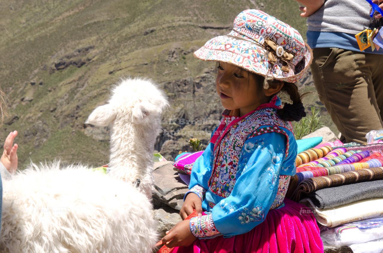 Little Peruvian girl with white baby Alpaca