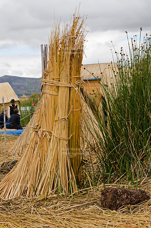 Bundled reed, the only construction material on the floating islands of the Uros people, Lake Titicaca, Peru