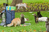 Cats in Kennedy Park, Miraflores