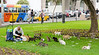 Feeding the Cats in Kennedy Park, Miraflores