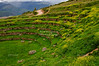 Agricultural Inca Terraces at Moray, Peru
