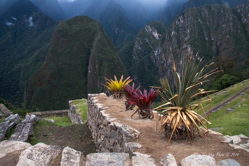 Machu Picchu 4938<br /> Plants along a wall in Machu Picchu.