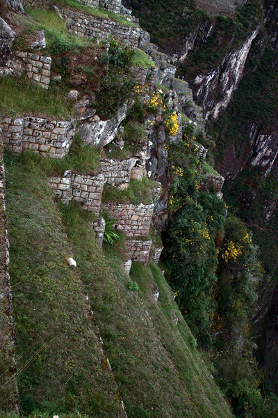 Farming Terraces 4897<br /> On the edge of Pachu Picchu.
