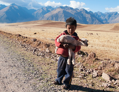 Kid with sheep