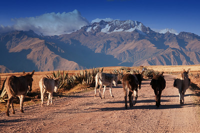 donkeys and chicon mountain
