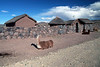 Family Farm 5841<br /> Family farms in the Puno area will have walls arounmd the farm to prtect their animals at night from wild animals. Llamas and Alpacas are staked out front.