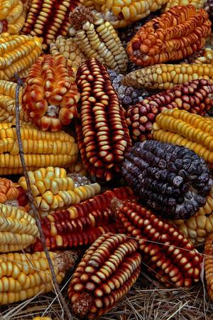 Ollantaytambo 4730<br /> Corn drying just out side of Ollantaytambo