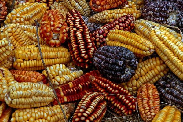 Ollantaytambo 4729<br /> Corn at Ollantaytambo field drying out.