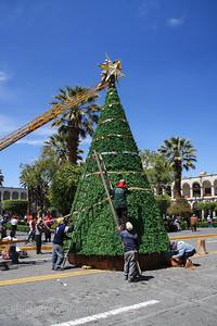Christmas Tree, Arequipa, Peru