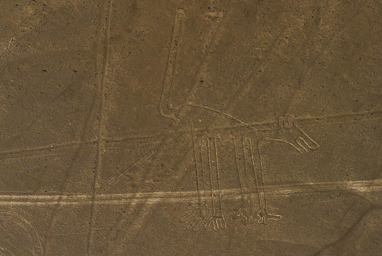 Nazca Lines Dog
