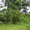 Garden for village