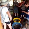 River Turtle release