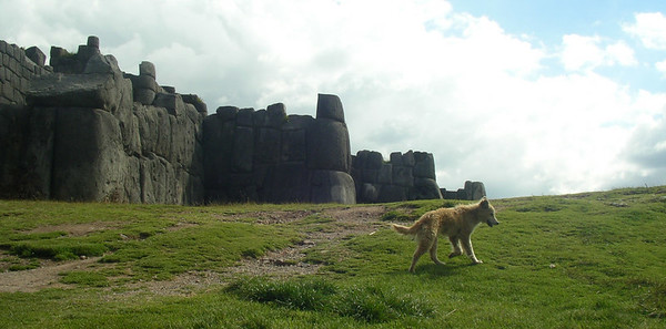 The Inca site above Cuzco, Sasquayhuaman, and a little yellow dog.