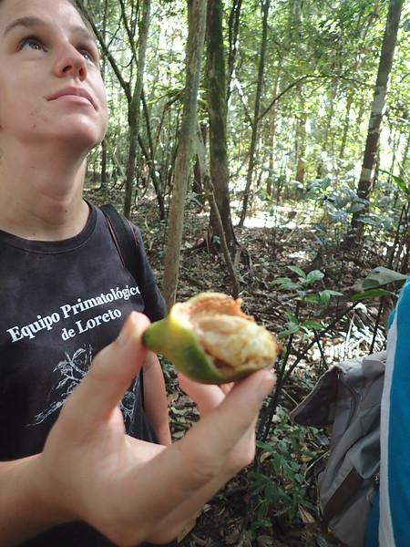 Squirrel Monkey Fruit