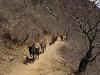 Trekking de 8 días por el camino Inca alternativo.