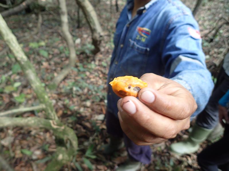 Fruit eaten by squirrel monkey