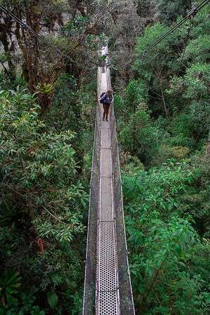 A tourist walks across a canopy bridge at 11,000 feet in the cloud forests of Manu