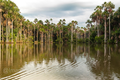 Lake Sandoval, Peru