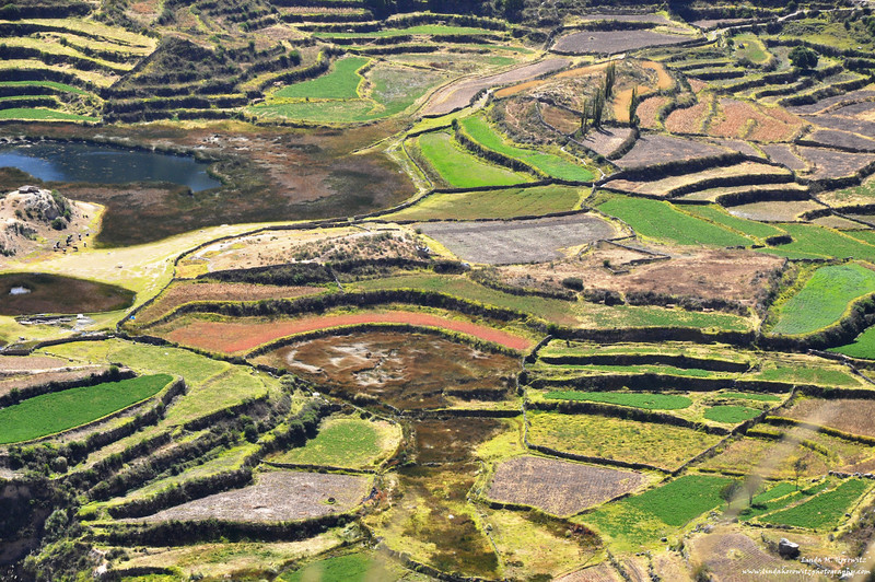 Agriculture in the Andes