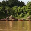 Peru 2012: Rio Madre de Dios - 210 Gold dredge on the Rio Madre de Dios
