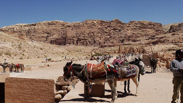 Petra - -1020256