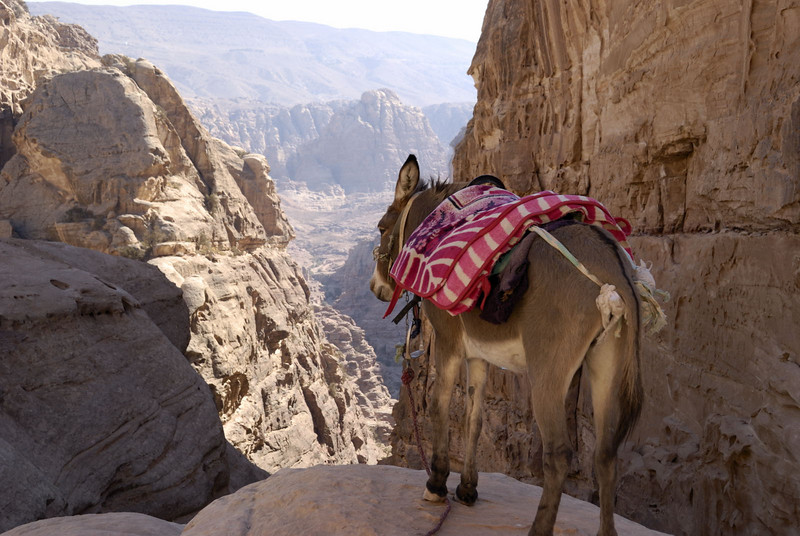 A donkey rests with a grand view down towards Petra