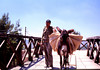 Landscaper herding his burro across a bridge.