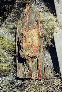 "11/12/99  South Entrance Station: ""Giant Logs"", Petrified Forest National Park. Navajo County, AZ"