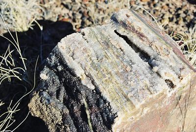 """11/12/99 Calcite Crystals in petrified log. """"Long Logs"""" Agate House Trail (off-trail), Petrified Forest National Park. Navajo County, AZ"""