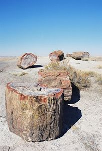 11/12/99 Petrified logs with agate. Crystal Forest, Petrified Forest National Park. Navajo County, AZ