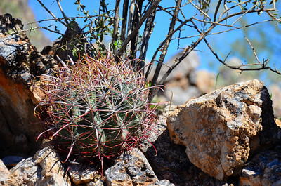 Arizona Cactus on Silly Mountain