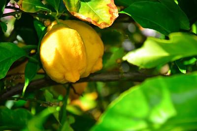 Arizona lemons