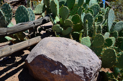 Arizona Cactus.