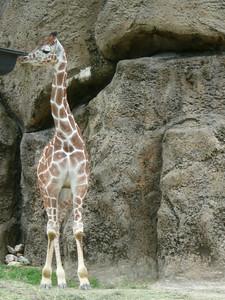 Philadelphia Zoo