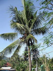 13 The righteous shall flourish like the palm-tree; he shall grow like a cedar in Lebanon.