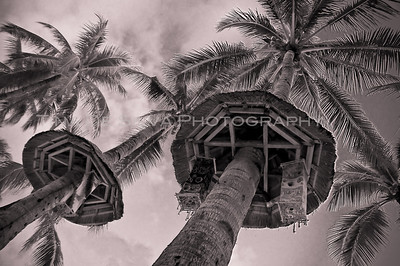 Infrared Coconut Trees Boracay Beach Philippines