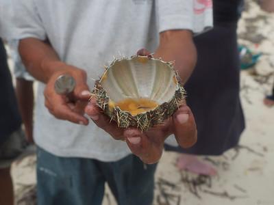 fresh sea urchin
