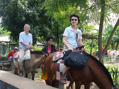 riding the horses up to the top of Taal Volcano