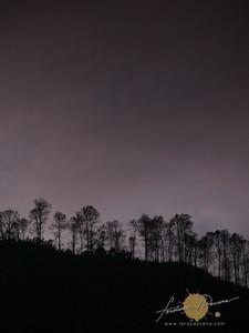 Bangaan, Dawn Trees