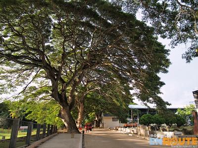 Lazi Balete Trees
