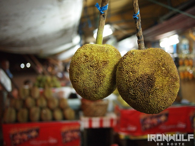 A young Durian fruit hanging on a stand