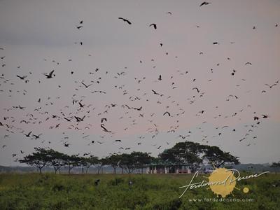Candaba Wetlands