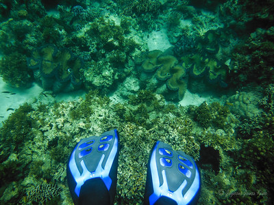 Giant clams underwater at Carbin Reef, Sagay Marine Reserve