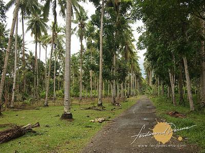 Rizal Farm