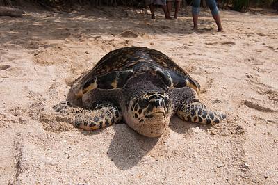 Turtle island, near Guimaras Island