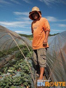 La Trinidad, Strawberry Farm